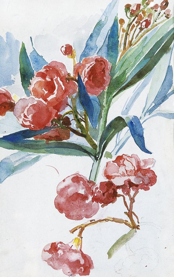 Marie-Egner-Oleanderblueten_web