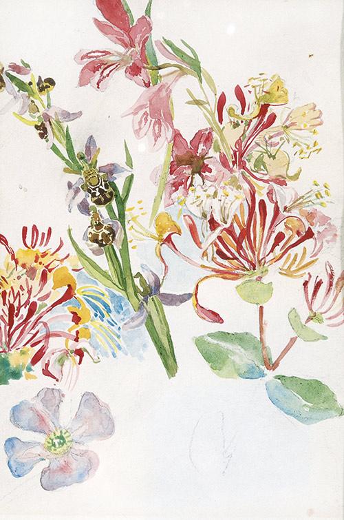 Marie-Egner-Sommerblumen_web