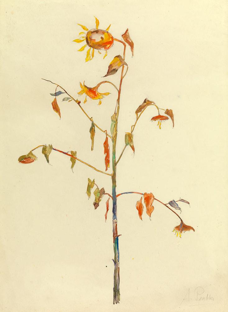 web_A_Peschka-Sonnenblume